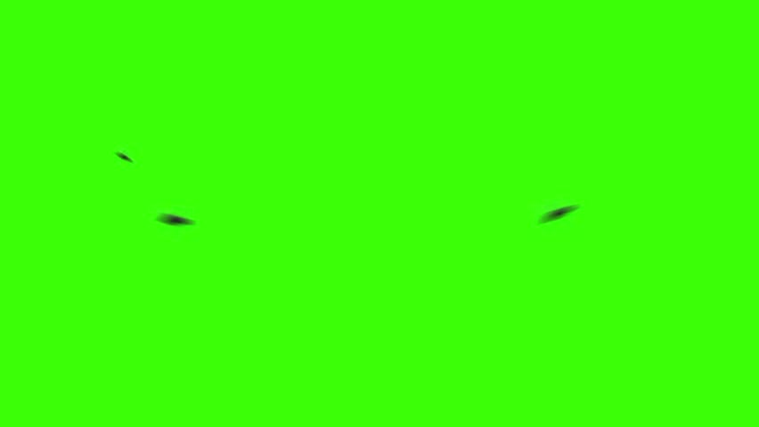 Bees Flying on a Green Screen in Loop