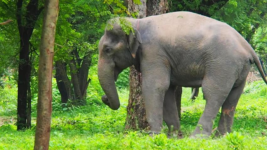 Happy Dancing Elephant | Shutterstock HD Video #33124246