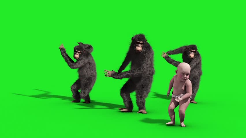 Group Chimpanzee Baby House Dance Dancer Green Screen 3D Rendering Animation Animals