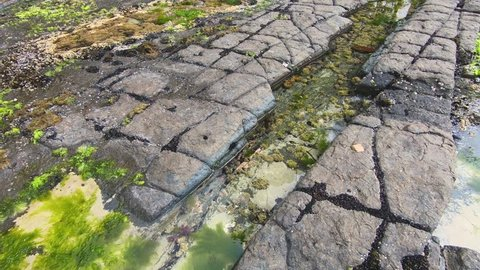 Tessellated Pavements at low tide showing moss, algae, and other growth along the shoreline, Tasmania, Australia