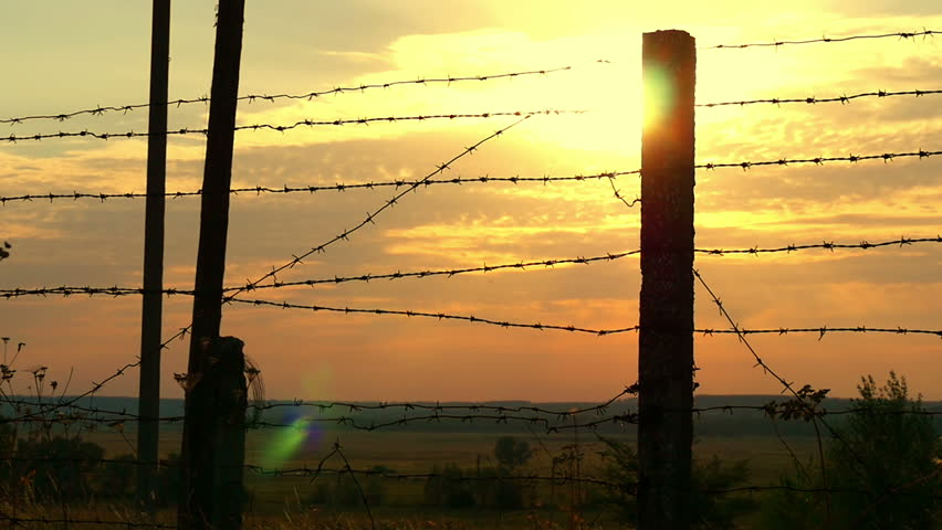 Military or prison fence of barbed wire at sunset close-up. The border zone, the danger zone, the security zone, the fence of the military unit and the prison against the sunset