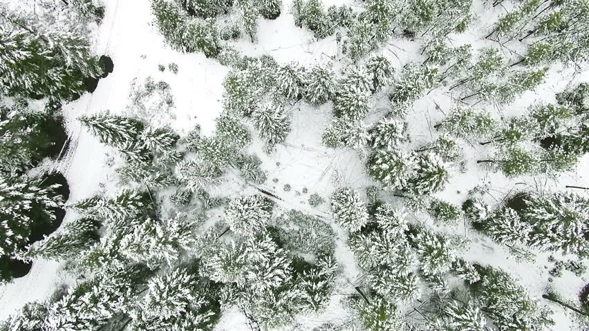 A clean and smooth beautiful snowy winter forest aerial with the camera looking straight down from 100 feet up