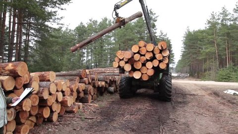 Pine timber and wood logging by forwarder in the forest under manager control
