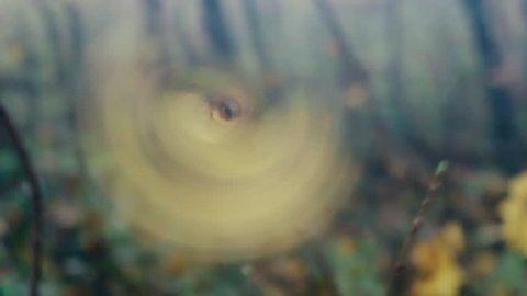 Deep autumn. Wind rips yellow leaves. Last leaf of maples rotates in wind like pinwheel (propeller, airscrew)