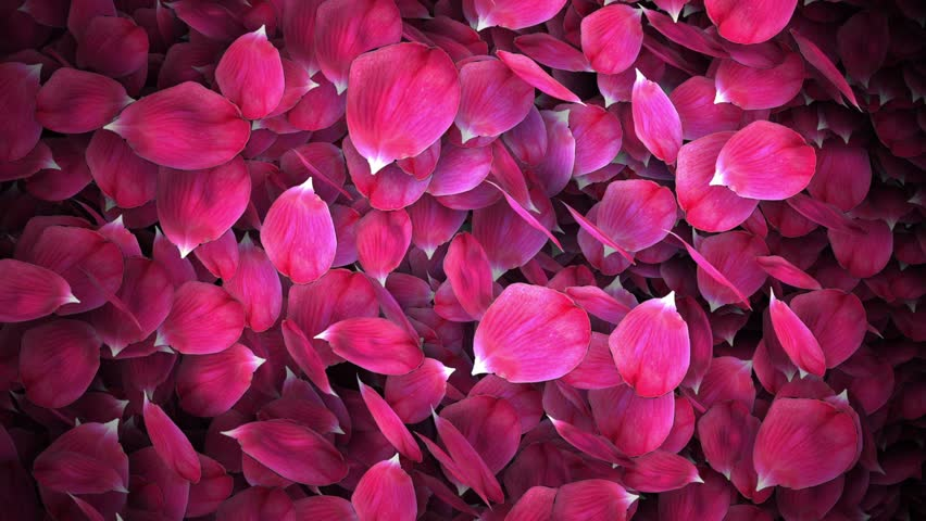 Roses free video clips 283 free downloads animated rose petals transition with isolate masking channel mightylinksfo
