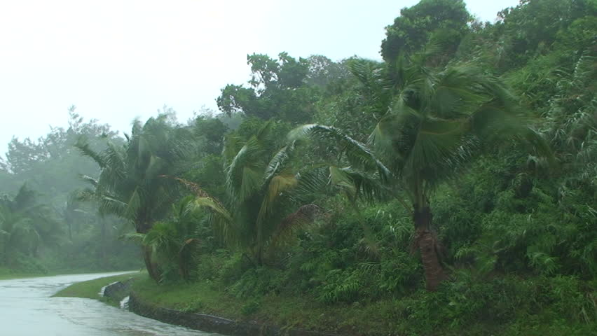 Palm Trees Blow in Strong Wind of Tropical Storm.