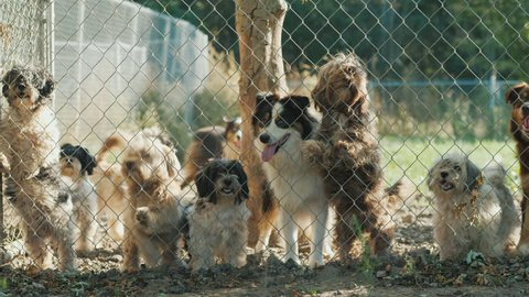 Many dogs of different breeds look through the net in a shelter or nursery