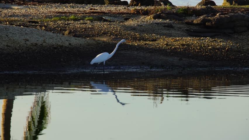 Header of heron