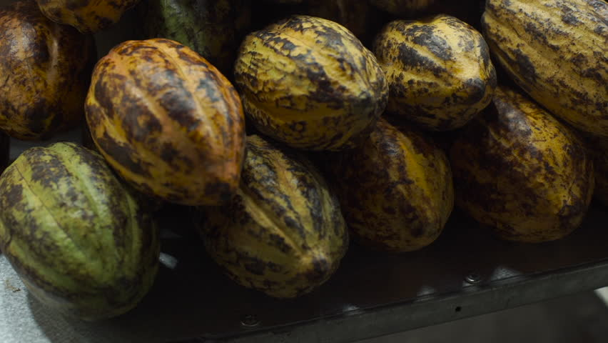 Boom up shot of Cocoa fruits on an asian night market   Shutterstock HD Video #33933247