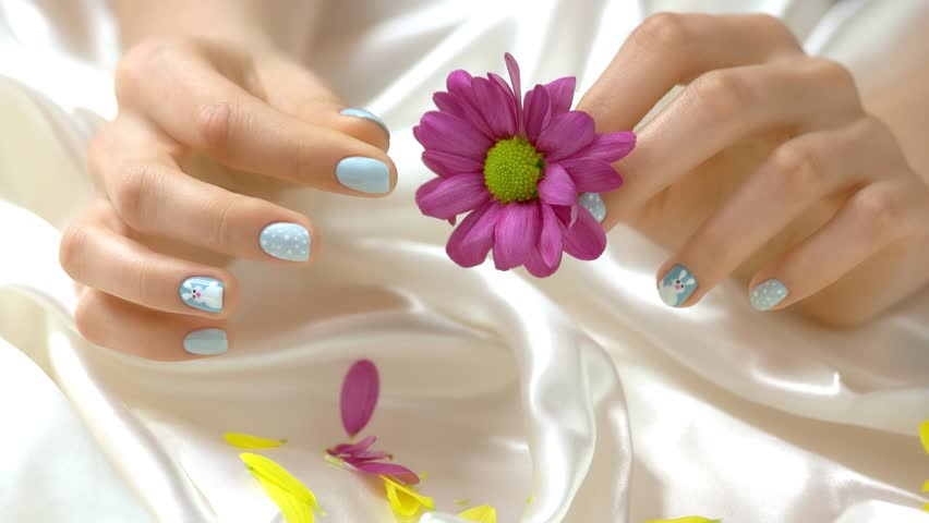 Woman hands tear off the chrysanthemum petals. Well-groomed manicured hands and pink little chrysanthemum flower on white silk fabric.