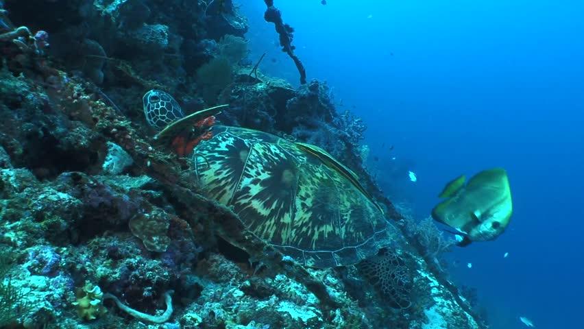 Turtle | Shutterstock HD Video #3402956