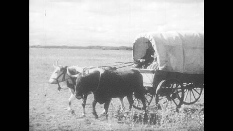1940s: Man and woman ride in covered wagon, man holds reins. Boy and girl look out back of wagon. Wagon travels across field with cow tied to back. Men and women set up camp in field next to wagon.