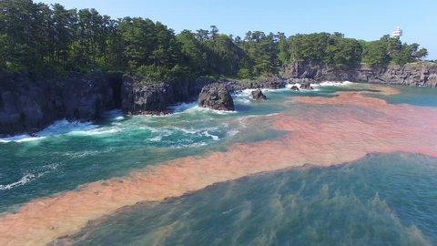 Aerial View of Red Tide, Algal Bloom, Aquatic Microorganisms in Japan Pacific Ocean