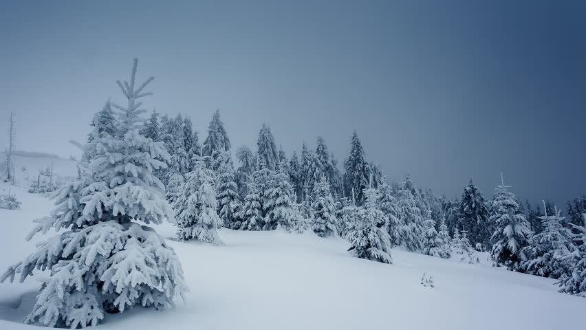 Beautiful winter landscape with snow covered trees. Carpathian, Ukraine. Time