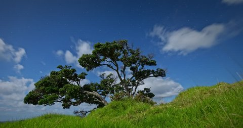 Timelapse of pohutukawa tree At Matauri Bay at night. Northland, New Zealand