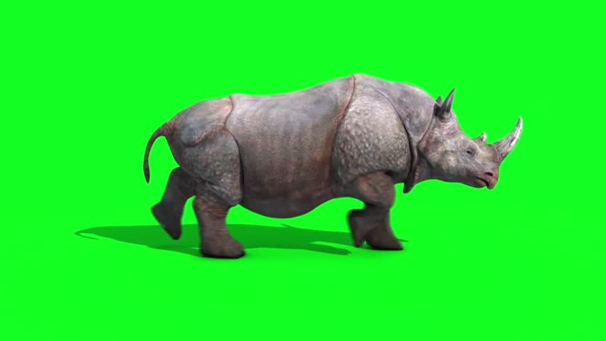 Rhinoceros Runcycle Side Green Screen Loop 3D Renderings Animations Animals