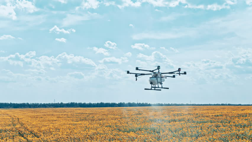 Agriculture drone spraying pesticides on sunflowers field in sky