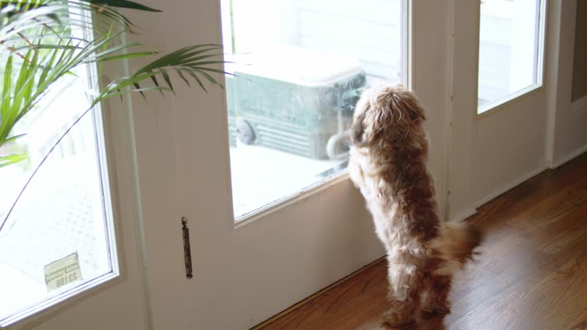 Long-haired dog barking at delivery man on front porch | Shutterstock HD Video #34756576