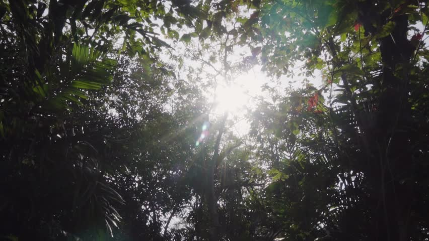 Slow motion of natural big tree in the park with sun flare | Shutterstock HD Video #34776226