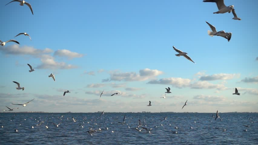 Seagulls fly over the sea. Slow Motion. 240 fps. | Shutterstock HD Video #34800466
