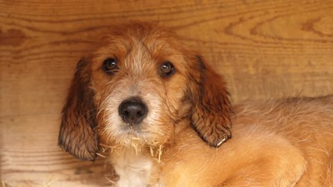 Kennels Stock Video Footage - 4K and HD Video Clips