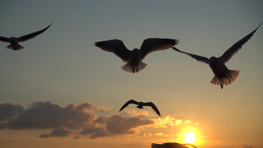 Seagulls fly over the sea. Slow motion.  | Shutterstock HD Video #34888426