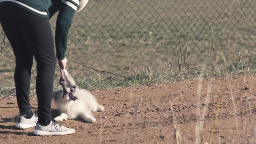 Spotted white puppy playing with rope owner and border collie outside slow motion