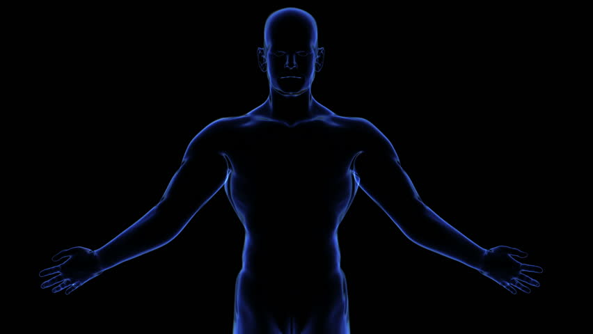 all human body systems. transition body - muscular system - body, Muscles