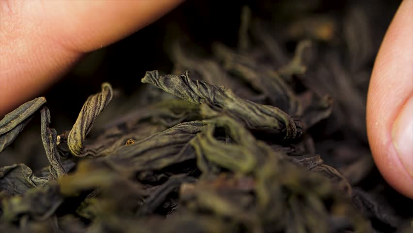 Male hand picks tea leaves for brewing. Chinese black tea. Dried tea leaves background. Macro. Beautiful dried black tea leaves closeup