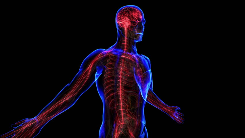 All Human Body Systems Transition Stock Footage Video 100 Royalty Free 3495056 Shutterstock