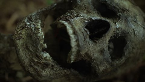 CLOSE UP SKELETON in the forest, lying in shallow grave.