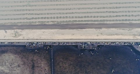 Aerial: Flying over large industrial scale cattle ranch in Bakersfield, California