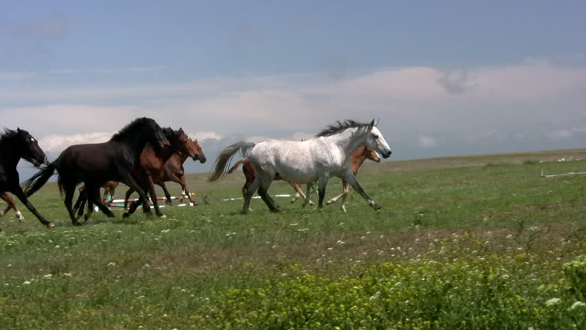 Herd of horses running on the steppes in the background cloudy sky. Slow motion | Shutterstock HD Video #3593966