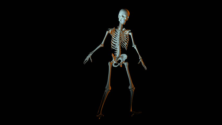 3d animation of human skeleton x-ray blue interface loop able, Skeleton