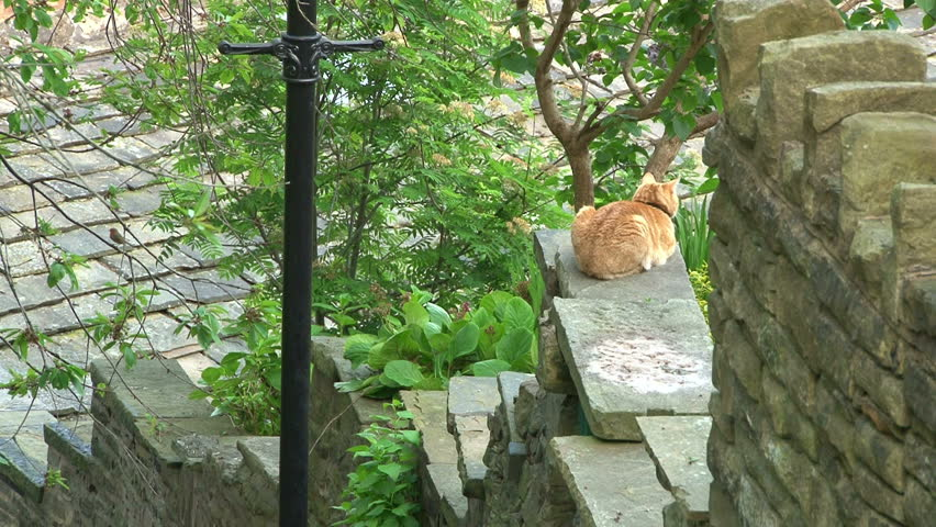 A ginger cat resting on a stone wall.