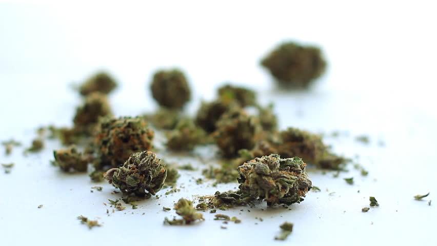 Medical Marijuana 10. Medical marijuana set against white, with rack focus.