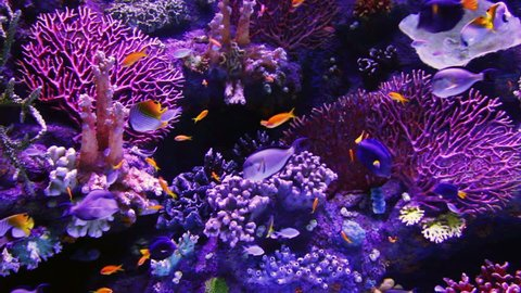 tropical fish and corals underwater