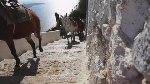 Greece santorini island, donkeys walking and climbing steps. Donkeys are used to transporting tourists from sea to the capitol
