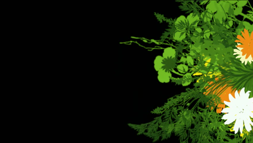 Quince Flower Growing Timelapse Cut Out Encoded With Photo Png