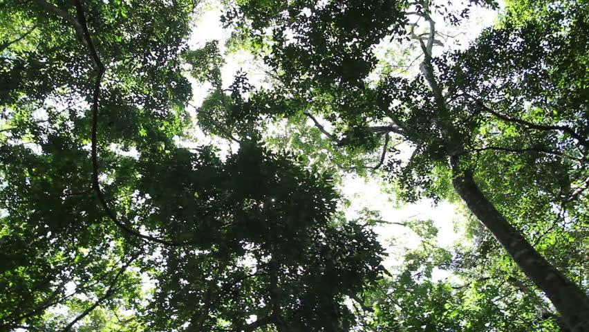The sunlight through the  forest | Shutterstock HD Video #4088836
