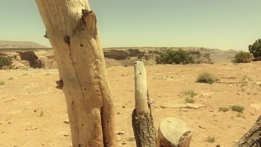 An old dead tree on the edge of a huge desert canyon