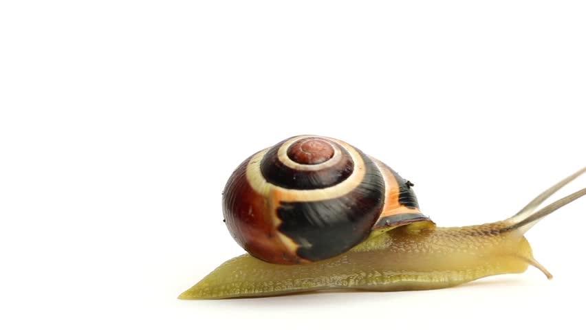 Header of slug