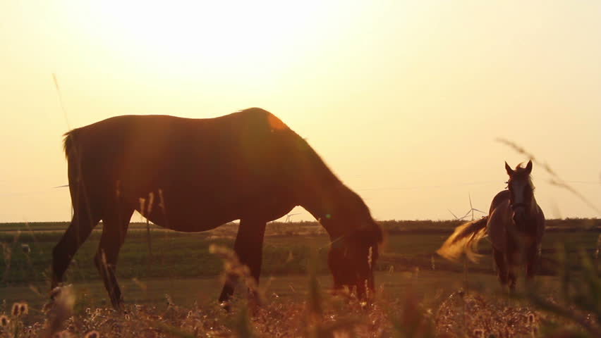 Horses at sunset ...