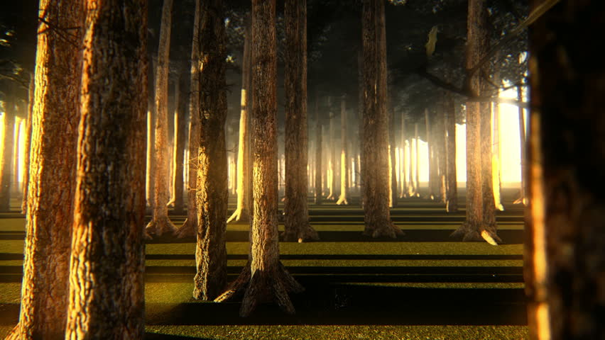 Strolling through trunks of a beautiful forest at dusk or dawn with the sunlight in the background