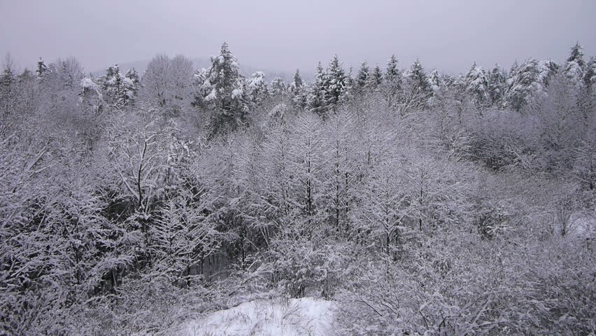 AERIAL: Snowing in nature
