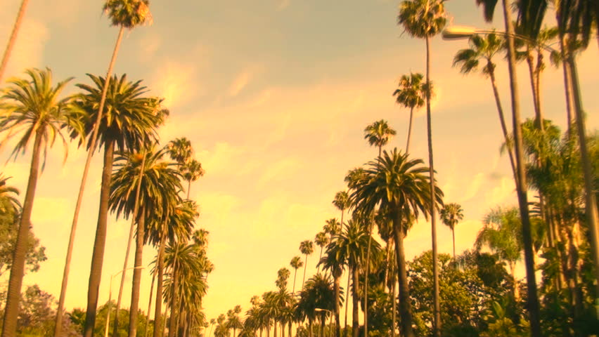Palm Trees at sunset - HD | Shutterstock HD Video #432166