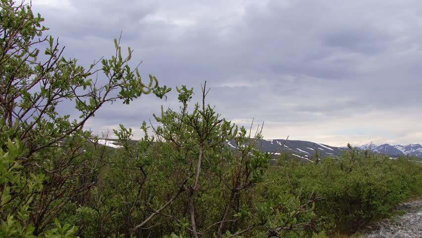 Pan from Alaskan wilderness to Trans-Alaskan petroleum pipeline