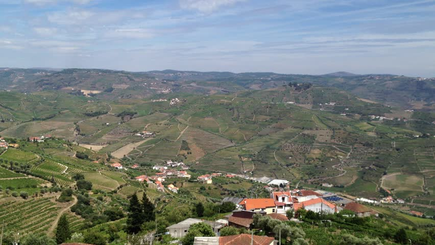 Video overlooking landscape of the Peso da Regua region's, in northern Portugal. Vineyards in the Douro Valley, Alto Douro Wine Region, officially designated by UNESCO as a World Heritage Site.
