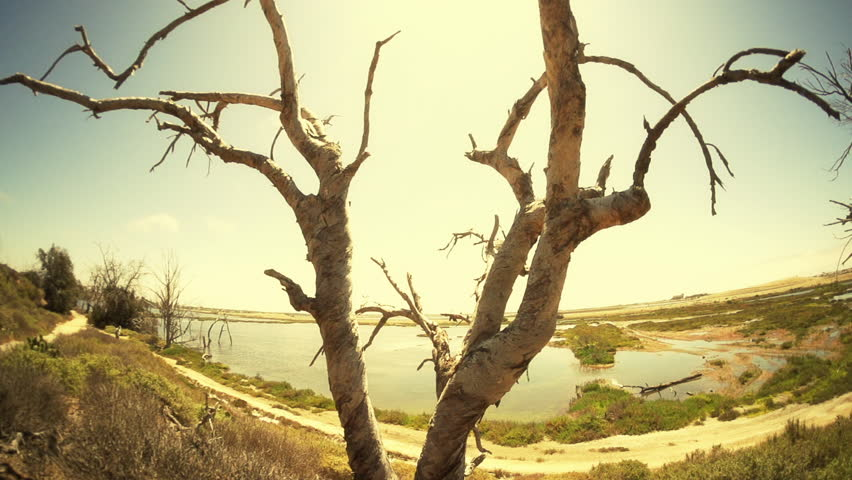 Apocalyptic Tree Wide Angle Tilt