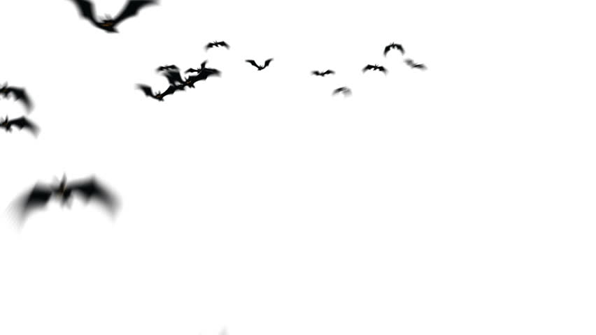 Swarm of creepy bats animation. | Shutterstock HD Video #4457846